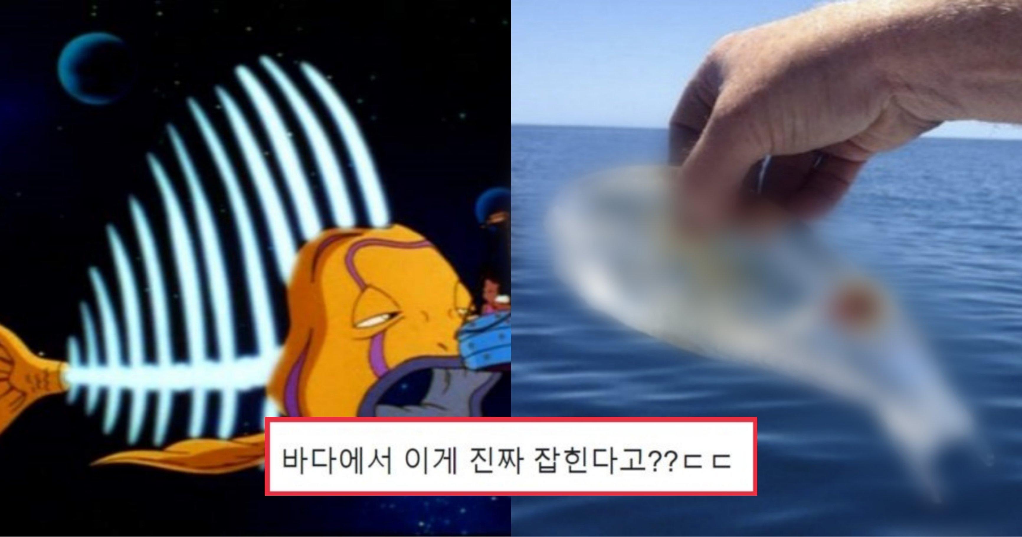"kakaotalk 20210929 202708513.jpg?resize=412,232 - ""이게 실제 존재해?"" 만화 속에서만 보던 투명 물고기의 정체"