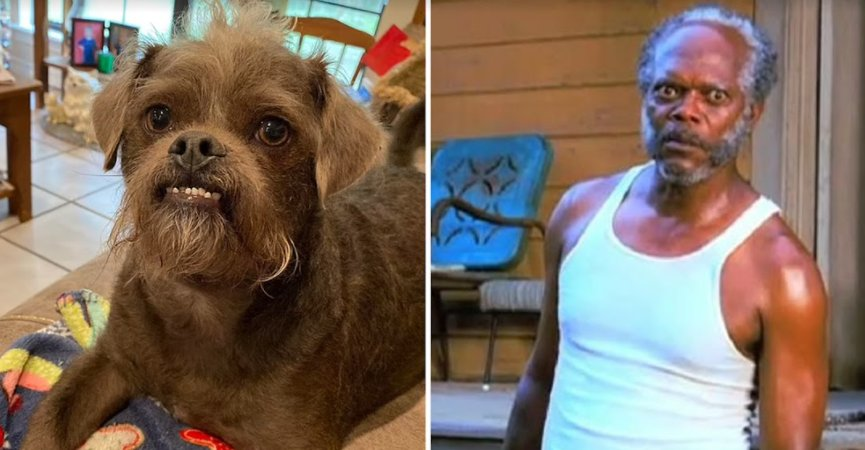 screenshot 2021 09 21 234556.png?resize=412,275 - Samuel L. Jackson As A Dog! Mississippi Couple Has A Dog That Made People Fall In Love With Him