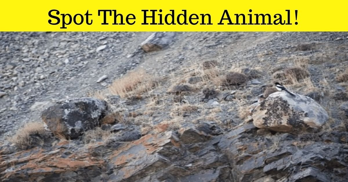 spot the hidden animal.jpg?resize=1200,630 - How Fast Can You Spot The Hidden Animal In This Photo? It's Very, Very Big!