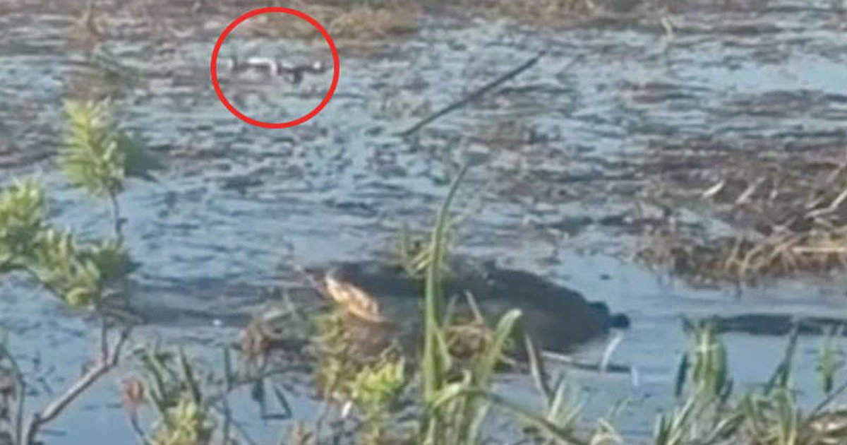 t3 2021 09 10t212253 569.jpg?resize=412,232 - Horror TikTok Video Shows Florida Alligator Going Up In SMOKE After Chomping Up On DRONE