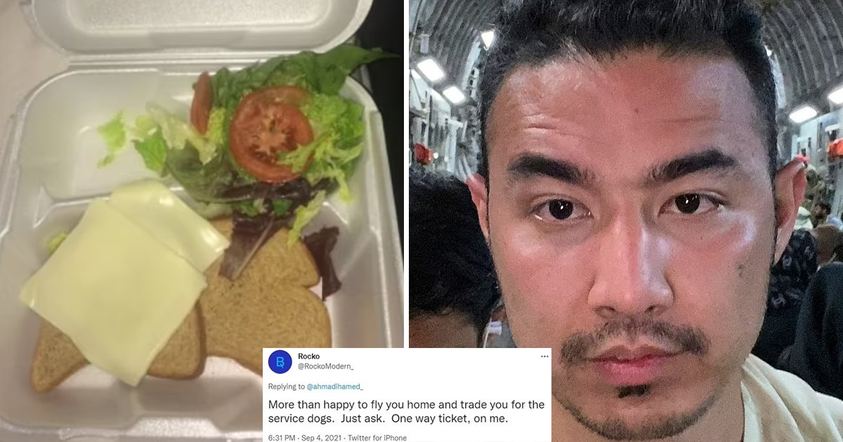 """t3 97.jpg?resize=412,232 - """"We'd Trade You For A Service Dog""""- Afghan Refugee Blasted For Sharing Picture Of 'Pathetic' Looking FREE Food"""