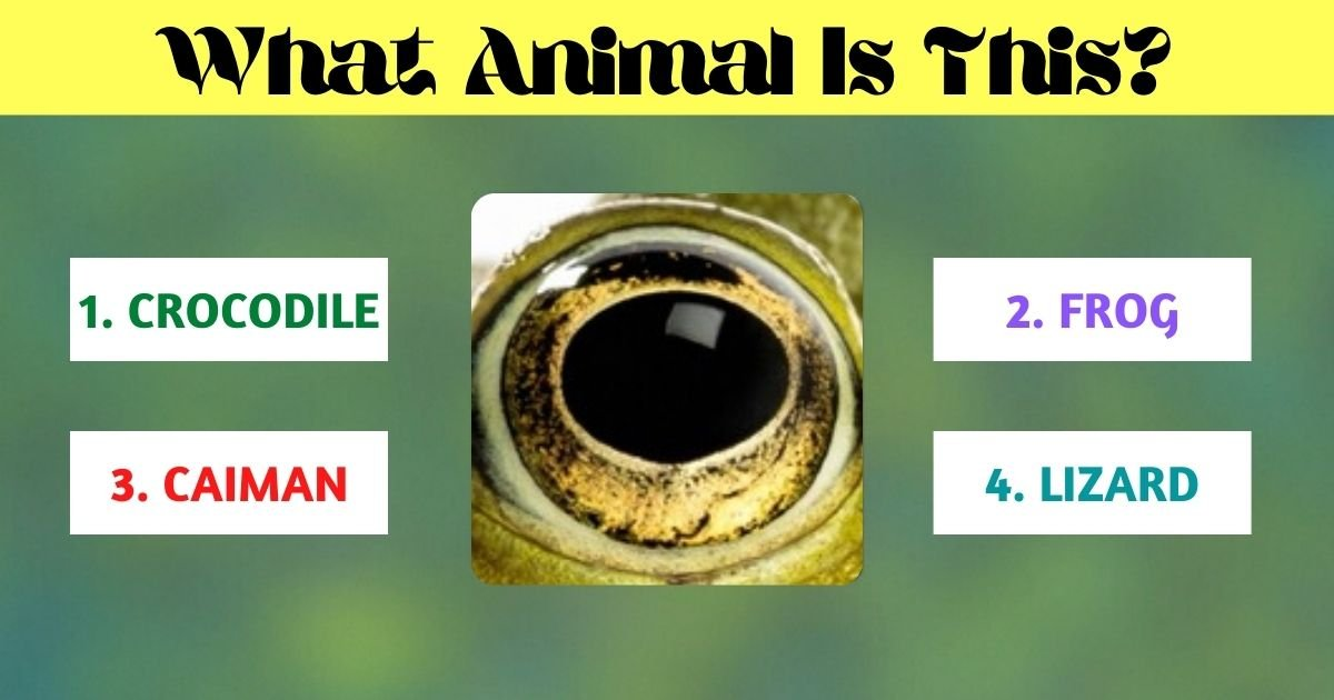 what animal is this.jpg?resize=412,275 - What Animal Does This Eye Belong To? Think Twice Before Answering!