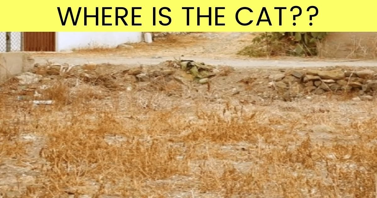 where is the cat.jpg?resize=412,232 - 90% Of People Can't Find The Cat In This Photo - But Can You Beat The Odds?