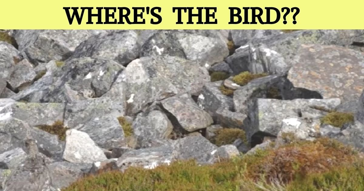 wheres the bird.jpg?resize=1200,630 - Find The Hidden Bird In 10 Seconds! Only 1 Out Of 10 People Can Spot The Animal