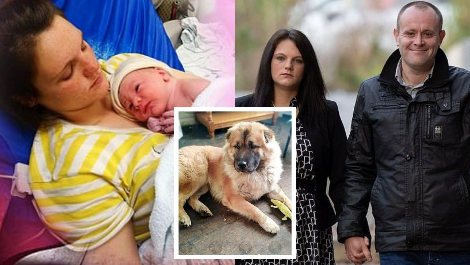 1 44.jpg?resize=1200,630 - Parents Arrested After Jealous Family Dog Mauled Their 12-Day-Old Newborn Son To Death