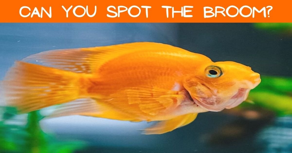 can you spot the broom.jpg?resize=1200,630 - 90% Of People Couldn't Find The Broom In This Photo Of A Fish! But Can You?