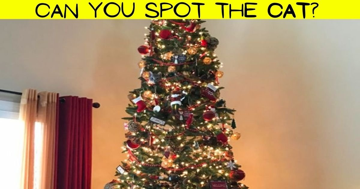 cat4.jpg?resize=412,232 - Most People FAIL To Spot The Cat Hiding In A Christmas Tree! But Can You Find The Adorable Feline?