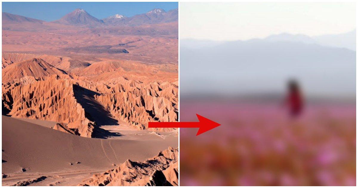 collage 186.png?resize=412,232 - 세계에서 가장 건조하다는 사막에 12시간 동안 비가 쏟아졌더니 생긴 현상