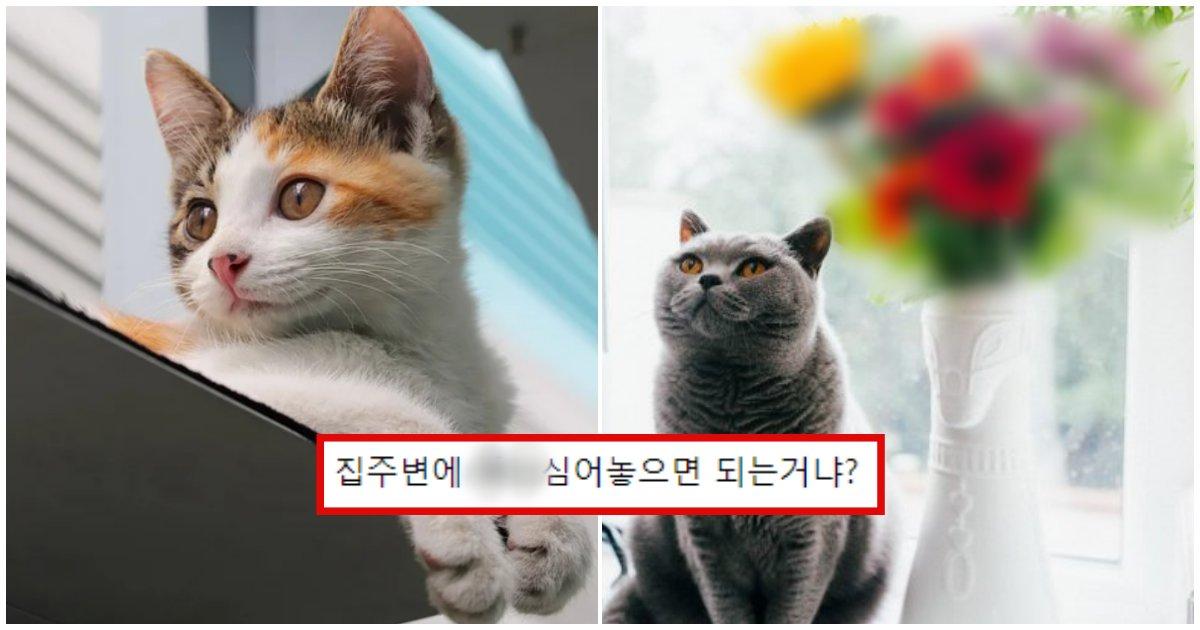collage 201.png?resize=412,232 - 고양이를 죽음에 이르게 한다는 '치명적인 꽃'
