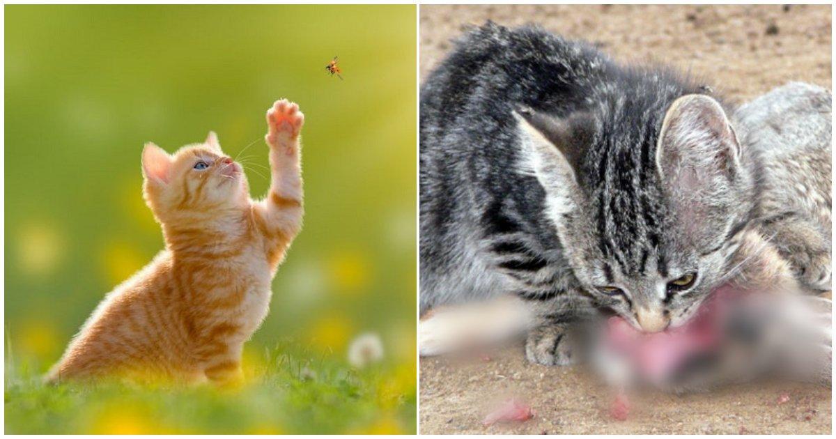 collage 274.png?resize=412,232 - 사냥에 재미붙인 한마리의 고양이가 멸종시킨 동물