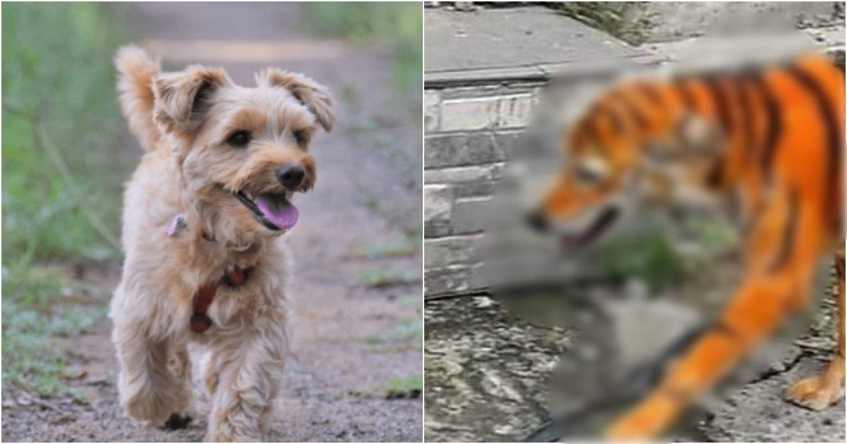 "collage 57.jpg?resize=1200,630 - ""길 떠돌던 강아지에 호랑이 염색 시킨 범인 찾습니다"""