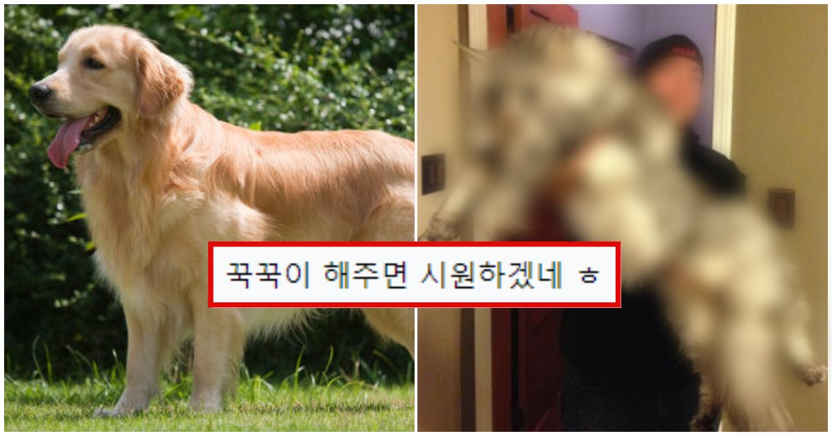 """collage 63.png?resize=1200,630 - """"성격이 순한데다가 똥도 짱 커요"""" 고양이계의 골든 리트리버 (+사진)"""