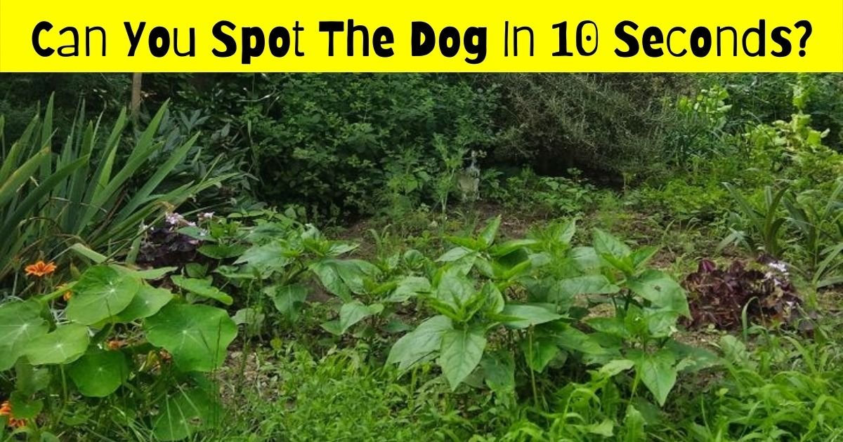 pooch4.jpg?resize=412,275 - 90% Of Viewers Fail To Spot The Dog In This Photo! But Can You Find It?