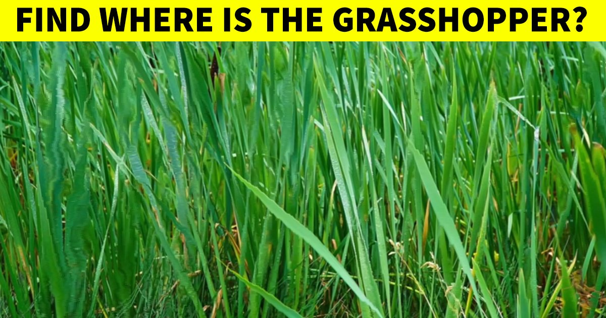 q7 5 1.jpg?resize=412,232 - Vision Test | Can You Find The Hidden Grasshopper In This Puzzling Picture?