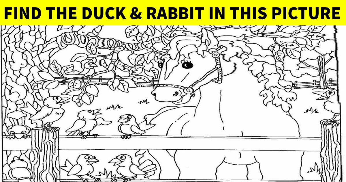 q8 3 1.jpg?resize=412,232 - Can You Crack The Code And Find The Animals In This Picture?