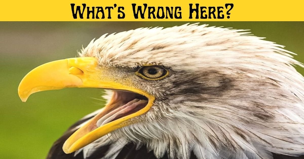 whats wrong here 5.jpg?resize=1200,630 - 90% Of Viewers Couldn't Spot The Mistake In This Photo Of An Eagle! But Can You?