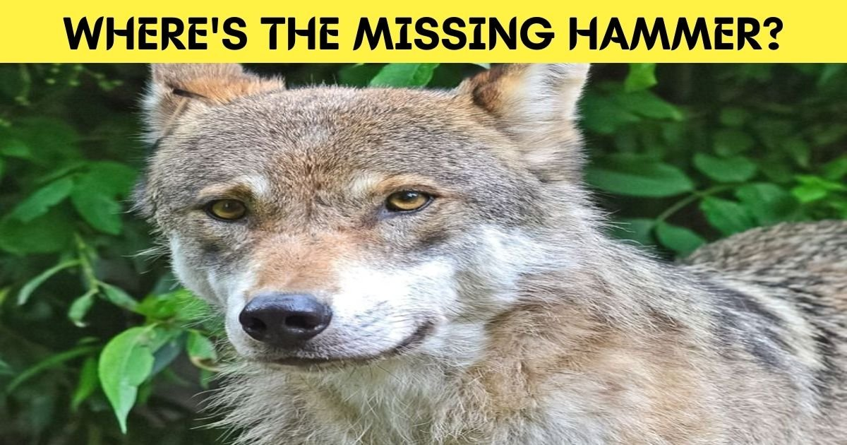 wheres the missing hammer.jpg?resize=412,232 - How Fast Can You Find The Hidden Hammer In This Photo Of A Wolf?